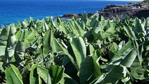 ADER La Palma propone la informatización para la gestión agrícola y ganadera