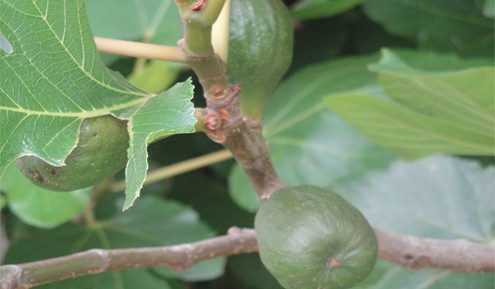Charla sobre frutales tradicionales