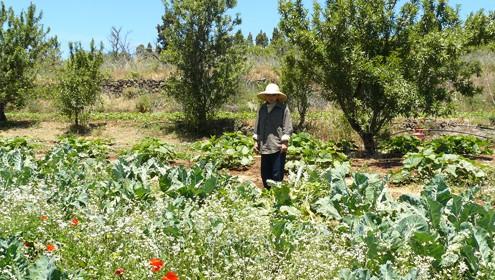 Se aprueba la Ley de Titularidad Compartida de las Explotaciones Agrarias