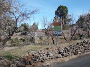 Paisaje de almendros en Puntagorda