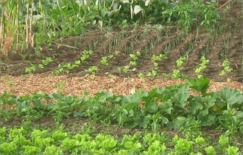 ADER-La Palma ayuda a los agricultores a planificar sus ventas