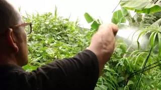 Finca Platanológico. Cultivo ecológico de la platanera – 2 años sin tratamientos