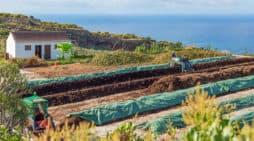 Un abono creado en La Palma