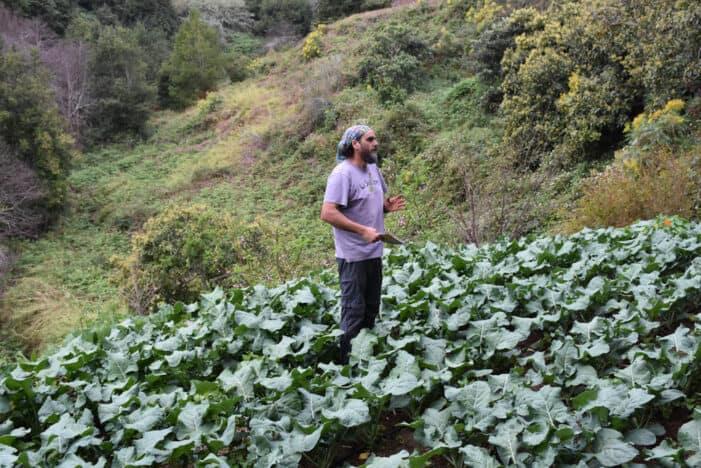 Desde la Finca La Suallera 'agricultureando' La Palma