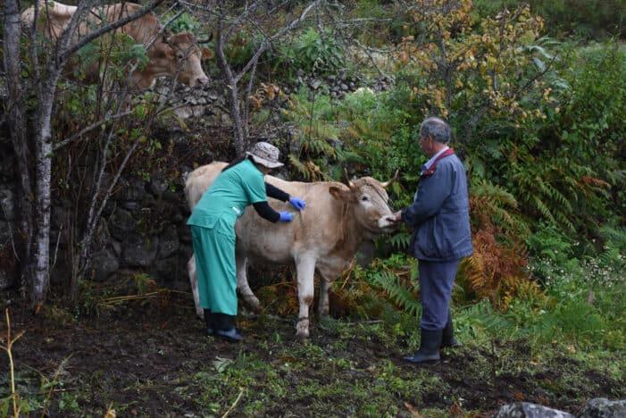 Buscamos que se reconozca el trabajo de la ganadería que ha apostado por una raza nuestra
