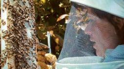 Vanessa Martín. Una mujer en un mundo de abejas