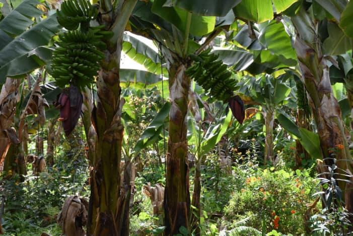 Finca de Martina y su visión de futuro para la agricultura
