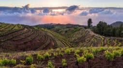 Más de cien premios avalan los 20 años de historia de la S.A.T. Bodegas Noroeste de La Palma